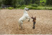 Horse 0069