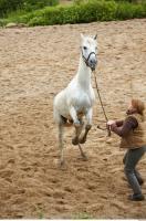 Horse 0075