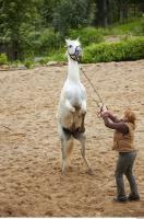 Horse 0078