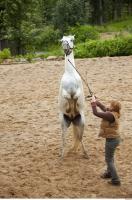 Horse 0079
