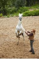 Horse 0080