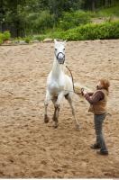 Horse 0081