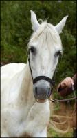 Horse # 1