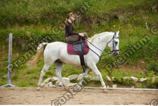 Horse poses 0109