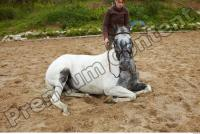 Horse poses 0055