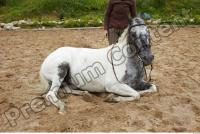 Horse poses 0056