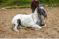 Horse poses 0057