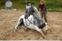 Horse poses 0058