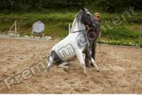 Horse poses 0060