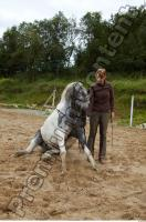 Horse poses 0064
