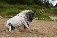 Horse poses 0066