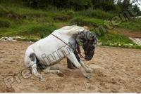 Horse poses 0067