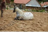 Horse poses 0104