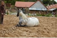Horse poses 0105