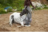 Horse poses 0106