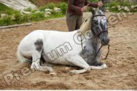 Horse poses 0107