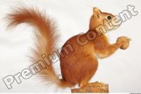 Squirrel-Sciurus vulgaris 0012