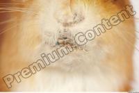 Squirrel-Sciurus vulgaris 0022