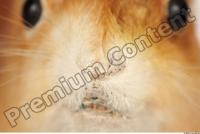 Squirrel-Sciurus vulgaris 0023