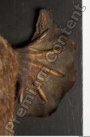 Duckbill-Ornitorhynchus anatinus 0057