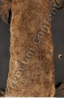 Duckbill-Ornitorhynchus anatinus 0063
