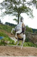 Horse poses 0108