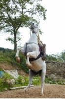 Horse poses 0110