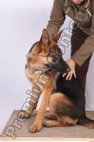 Dog-Wolfhound 0001