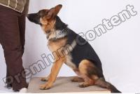 Dog-Wolfhound 0003