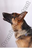 Dog-Wolfhound 0007