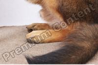 Dog-Wolfhound 0011