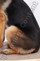 Dog-Wolfhound 0020