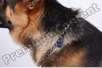 Dog-Wolfhound 0022