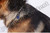 Dog-Wolfhound 0023
