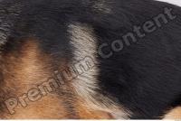 Dog-Wolfhound 0024