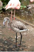Body texture of gray flamingo 0031