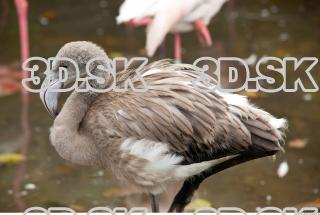 Body texture of gray flamingo 0033