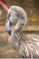 Head texture of gray flamingo 0012