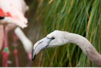 Head texture of gray flamingo 0018