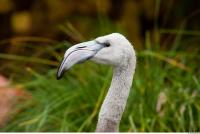 Head texture of gray flamingo 0019