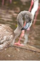 Head texture of gray flamingo 0021