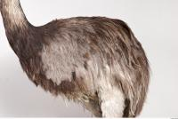 Emus body photo reference 0012