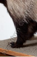 Badger leg photo reference 0001