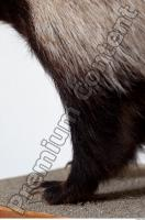 Badger leg photo reference 0002