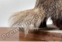 Badger tail photo reference 0001
