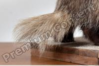 Badger tail photo reference 0002