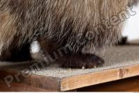 Badger tail photo reference 0003
