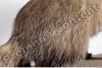 Badger tail photo reference 0005