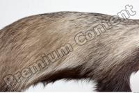 Badger body photo reference 0004