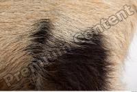 Pig fur photo reference 0003